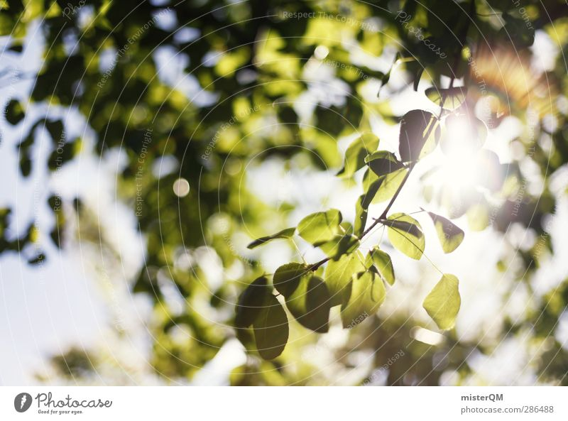 Green Bokeh. Environment Nature Landscape Esthetic Foliage plant Photosynthesis Light Visual spectacle Flare Beam of light Shaft of light Leaf Leaf canopy