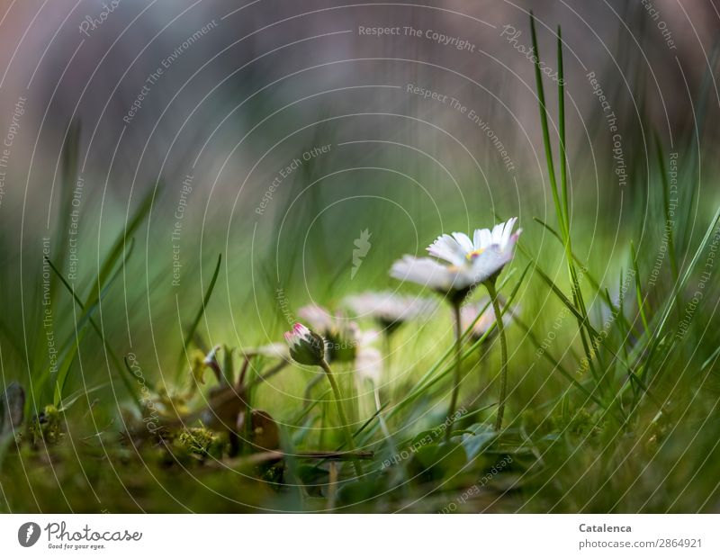 Nature Plant Beautiful Green White Flower Leaf Yellow Blossom Spring Meadow Grass Small Garden Pink Moody