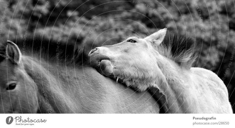 Relaxation Animal Pair of animals Friendliness Horse To hold on Set of teeth Pet Farm animal Loyalty Mane Rutting season Coat care