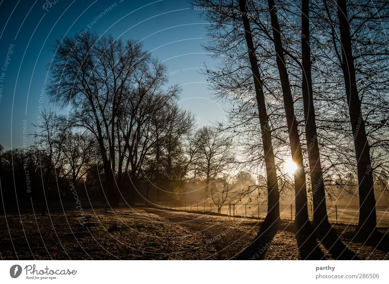 Fields of Fog Winter Nature Autumn Beautiful weather Ice Frost Tree Park Meadow Forest Cold Blue Brown Yellow Colour photo Exterior shot Morning Light Shadow