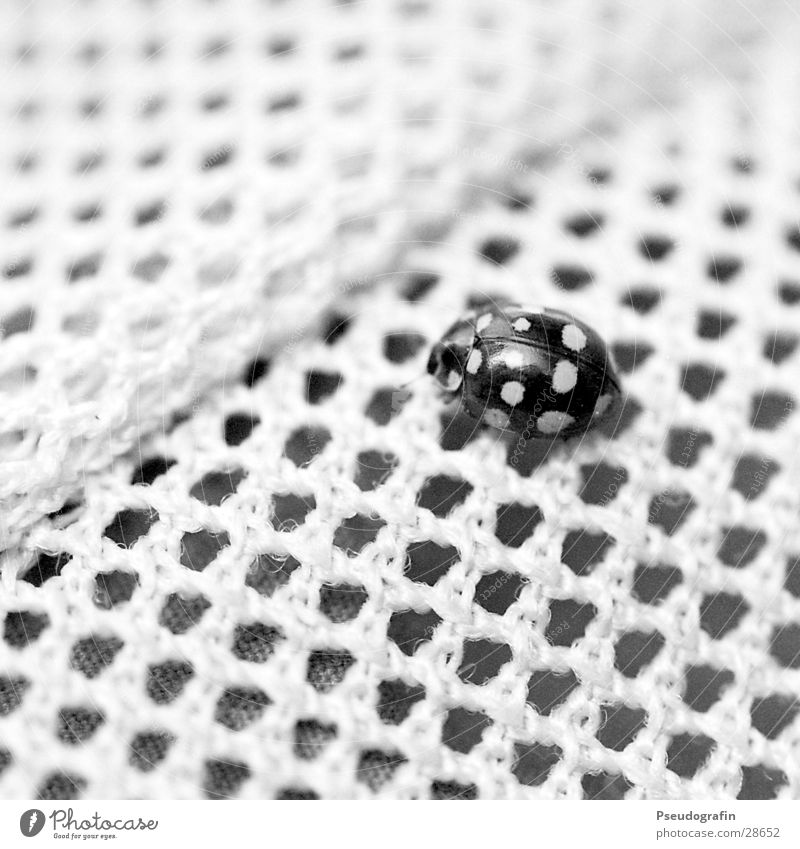 Camouflage!? Wild animal Beetle 1 Animal Black Esthetic Accuracy Uniqueness Network Arrangement Far-off places Ladybird Point Black & white photo Exterior shot