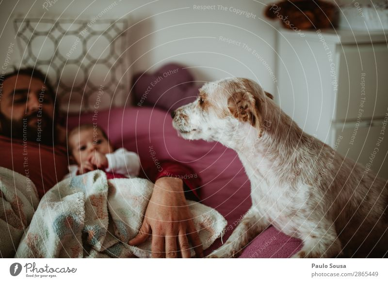 Father, Baby and Dog Child Human being Youth (Young adults) Animal Joy 18 - 30 years Lifestyle Adults Love Family & Relations Together Communicate Lie Smiling