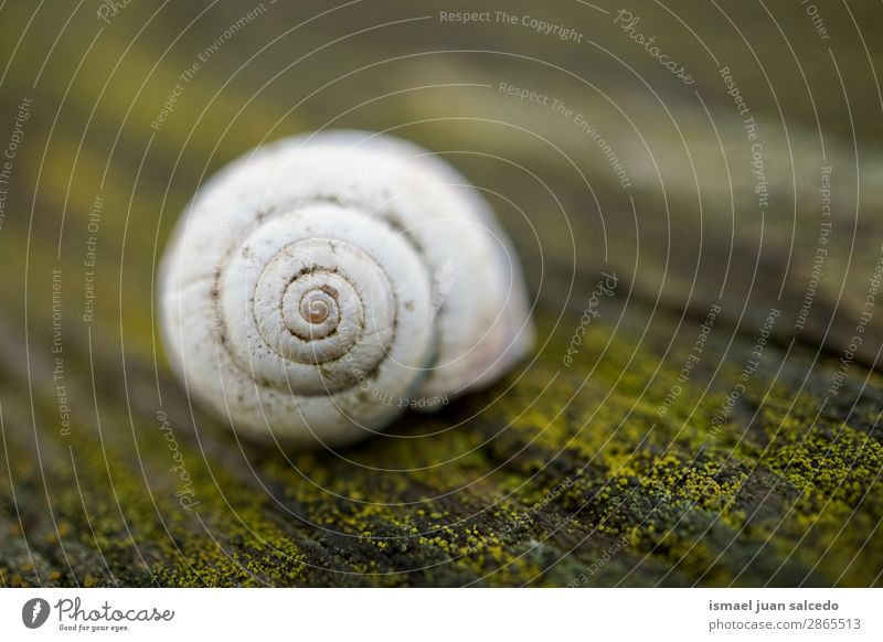 white snail in the nature Snail Animal Bug White Insect Small Shell Spiral Nature Plant Garden Exterior shot Fragile Cute Beauty Photography Loneliness