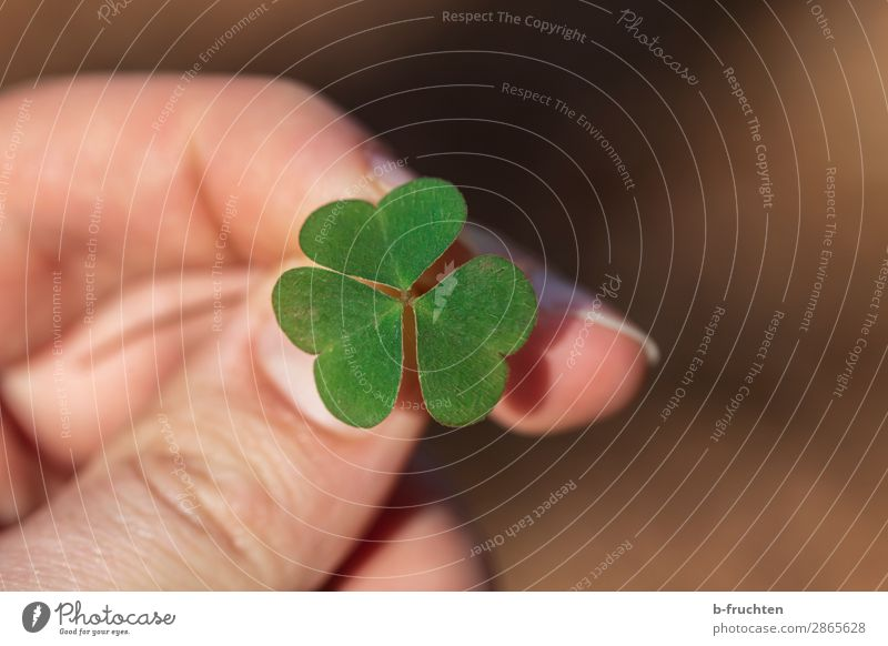 shamrock Harmonious Contentment Meditation Man Adults Hand Fingers Spring Plant Leaf Select To hold on Looking Fresh Positive Green Joy Happy Expectation Hope