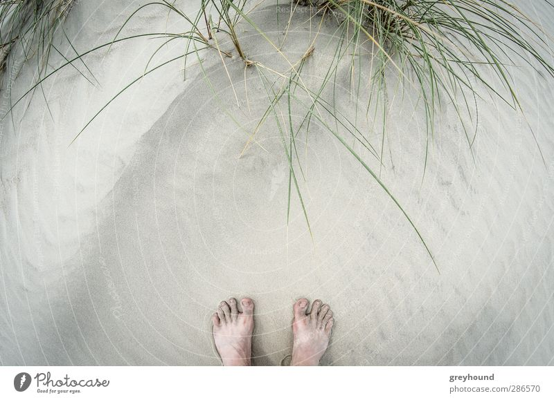 Vacation & Travel Summer Plant Ocean Beach Relaxation Environment Warmth Playing Spring Coast Sand Feet Swimming & Bathing Waves Tourism