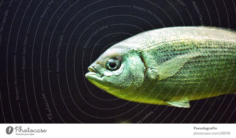 Green Water Animal Swimming & Bathing Wild animal Transport Wet Fish Zoo Fishing (Angle) Slimy