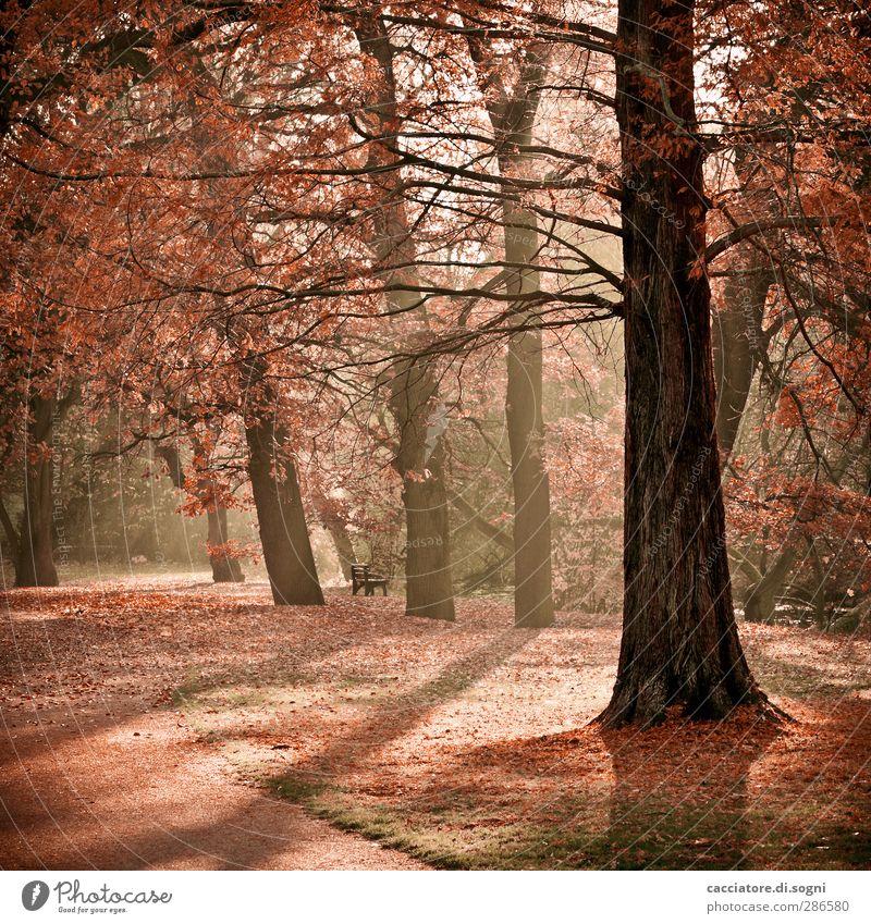 Nature Plant Colour Tree Loneliness Landscape Calm Warmth Life Autumn Moody Park Orange Dream Romance Beautiful weather