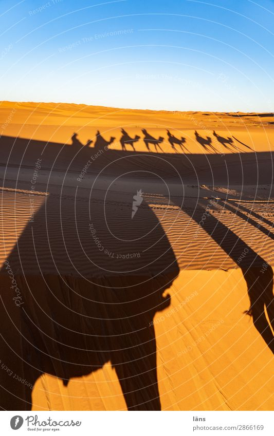 Caravan ll Morocco caravan Camel Dromedary Desert Sand Sahara