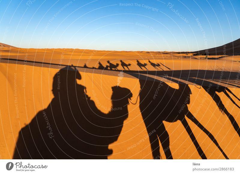 Caravan Vll Desert caravan Camel Dromedary Sahara Morocco Sand Shadow