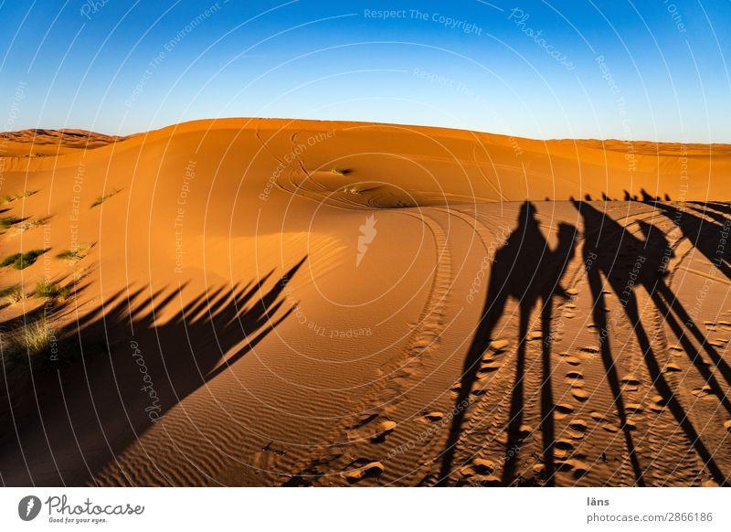Caravan V Sahara Desert Sand Sun Sunset Shadow Camel Dromedary