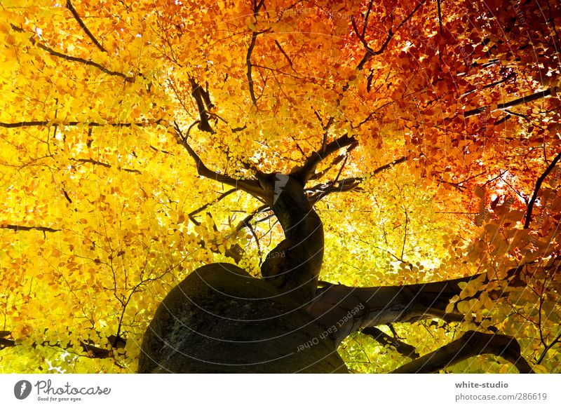 The veins of life Autumn Yellow Orange Transience Joie de vivre (Vitality) Life Rachis Vessel Life line Tree trunk Treetop Christmas tree decorations Branch