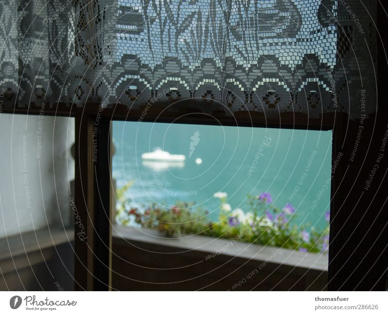 At the window Bad weather Flower Blossom Pot plant Lake Balcony Window Sport boats Sailboat Curtain Kitsch Turquoise Safety Safety (feeling of) Loneliness