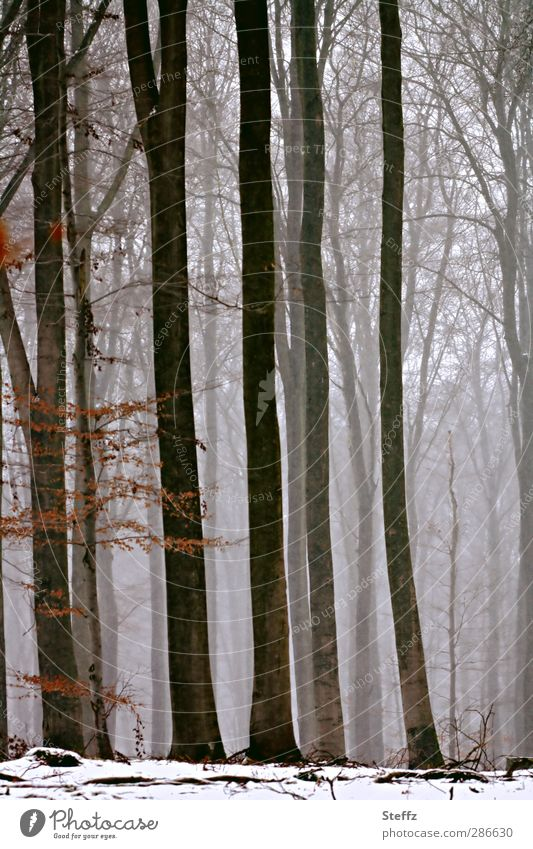 winter forest Nature Winter Fog Snow Tree Twigs and branches Forest Winter forest Edge of the forest Snowscape Cloud forest Cold Natural Beautiful Brown Gray