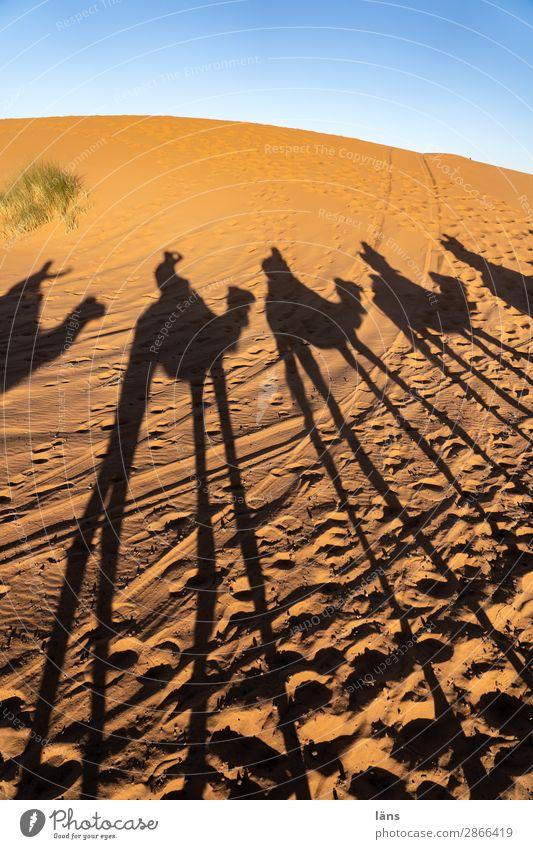 caravan Human being Life Group Environment Landscape Elements Sand Sky Climate Beautiful weather Desert Sahara Going Beginning Movement Uniqueness Ride Caravan
