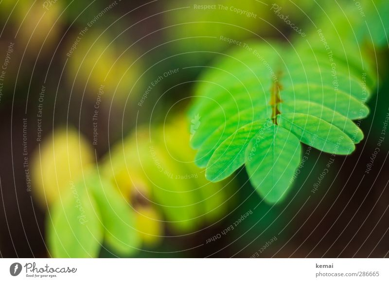 Green Power Environment Nature Plant Autumn Leaf Foliage plant Wild plant Forest Growth Fresh Bright green Bright Colours Colour photo Exterior shot Close-up