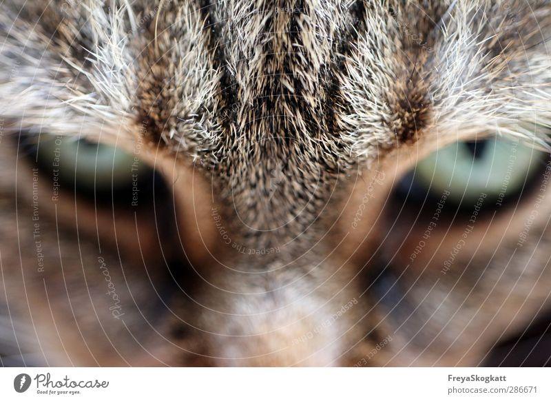 Not a step closer! Animal Pet Cat Pelt 1 Select Discover Looking Wait Cool (slang) Rebellious Smart Brown Brave Watchfulness Patient Dangerous Adventure