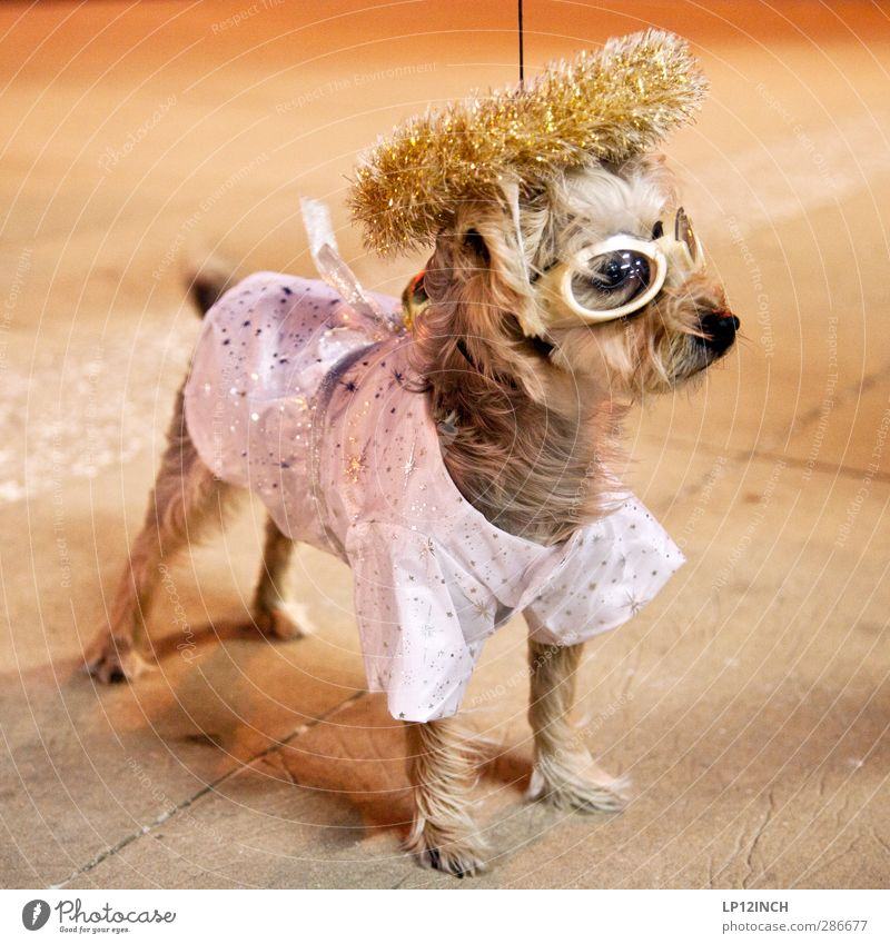 Dog Animal Party Creativity Pet Bizarre Hallowe'en Dress up Night life Disguised Going out Walk the dog