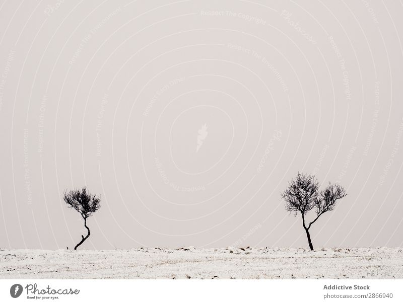 Lonely trees between snowy field and cloudy sky Tree Field Snow Sky Clouds Winter Iceland Loneliness Wood Meadow Cold Heaven Seasons Landscape Nature White
