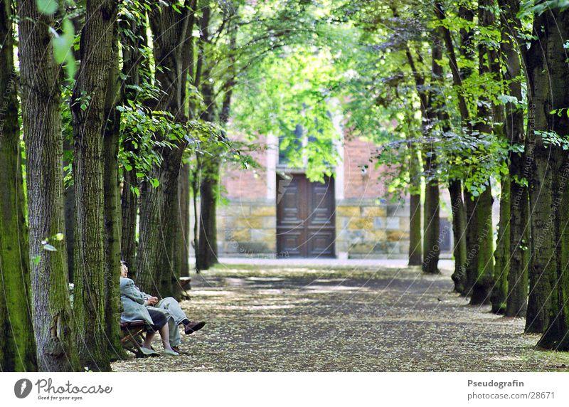 Human being Woman Man Old Tree Leaf Adults Senior citizen Feminine To talk Lanes & trails Couple Park Masculine Sit Wait