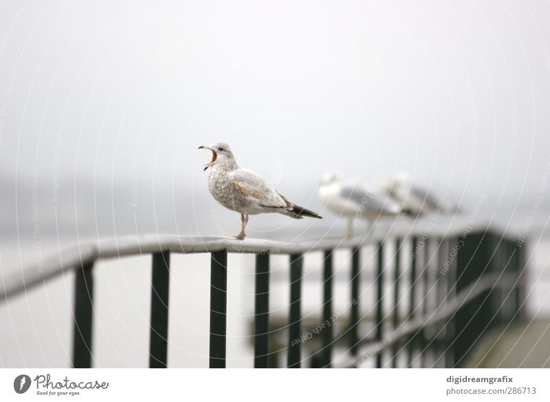 screaming seagull Animal Bird Group of animals Animal family Scream Aggression Crazy Brown Gray White Emotions Colour photo Exterior shot