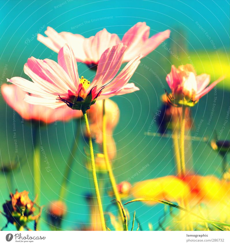 Florasoft I Nature Landscape Plant Spring Summer Flower Grass Leaf Blossom Foliage plant Garden Park Meadow Blossoming Fragrance Yellow Pink Turquoise