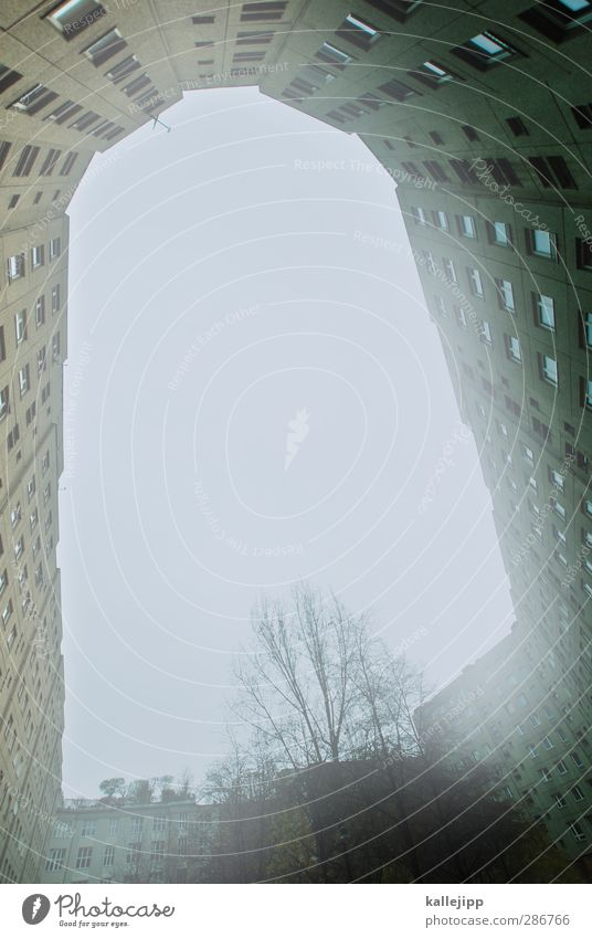 City Tree House (Residential Structure) Window Wall (building) Berlin Architecture Wall (barrier) Flat (apartment) Fog High-rise Living or residing