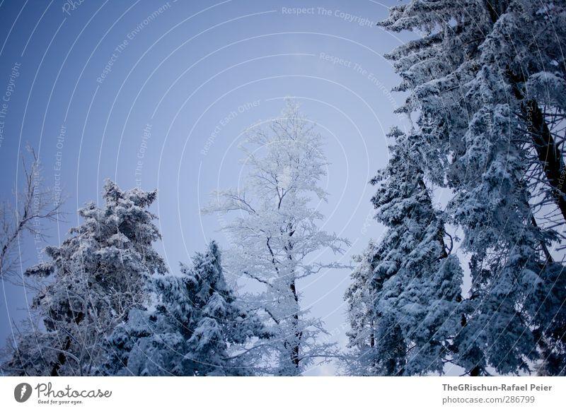 snow white Nature Landscape Plant Sky Winter Climate Snow Tree Esthetic Blue White Forest Bluish Wet Cold Seasons Wood Romance Heaven Weather Colour photo
