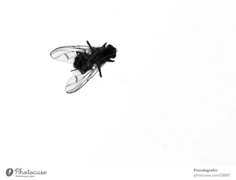 Animal Black Death Fly Wing Insect End Disgust Dead animal