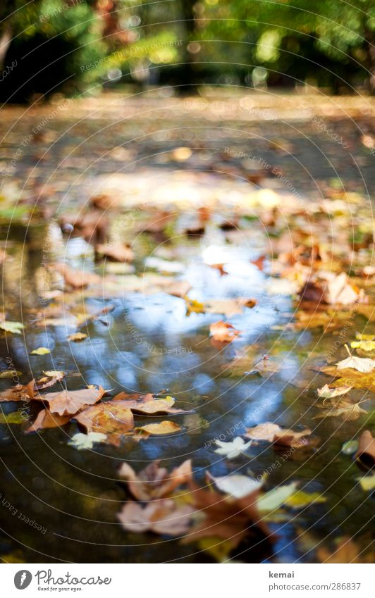 puddle of leaves Environment Nature Plant Water Sunlight Autumn Beautiful weather Leaf Wild plant Park Puddle Lie Swimming & Bathing Multicoloured Autumnal