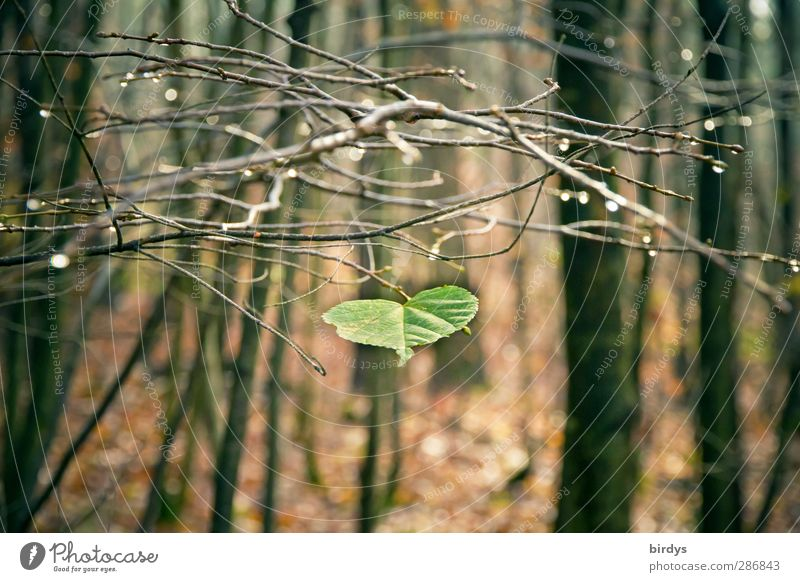 Nature Green Tree Leaf Loneliness Calm Forest Autumn Brown Natural Glittering Authentic Esthetic Drops of water Change Branch
