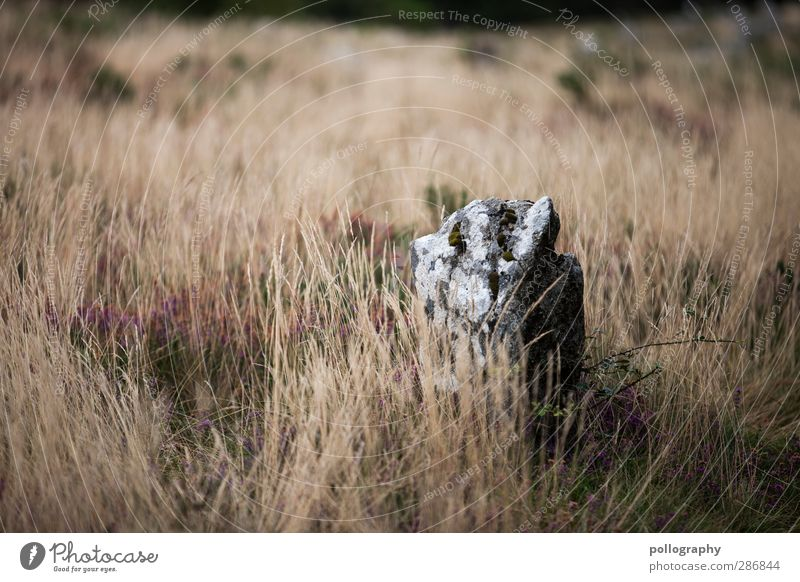 megalith Nature Landscape Plant Earth Grass Bushes Wild plant Meadow Field Stone Loneliness Uniqueness Megalith monument Megalithic culture Stone block