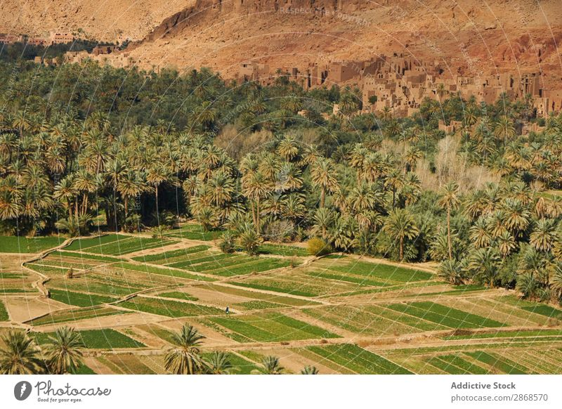 Green forest near stone constructions on hill Oasis Forest Construction Hill Marrakesh Morocco Ancient Palm of the hand Tree Landing Building Mountain Stone