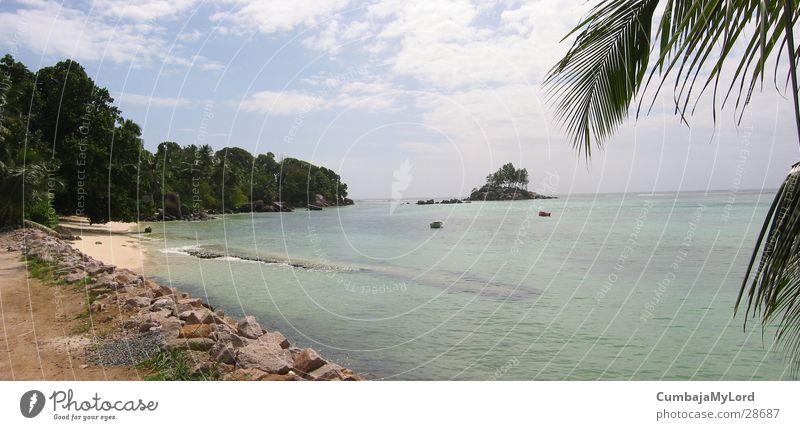 Seychelles Bay Beach Ocean Palm tree Munich Virgin forest Water Summer in the southern hemisphere