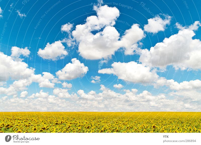 Sky Nature Plant Flower Clouds Landscape Far-off places Environment Meadow Movement Healthy Horizon Weather Field Climate Growth