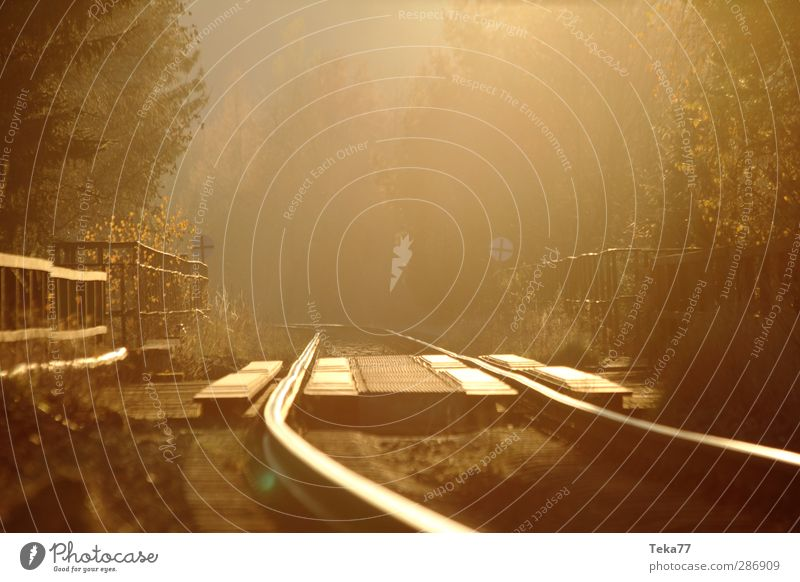 Autumn Gold Fog Track Environment Nature Landscape Sun Winter Beautiful weather Forest Transport Traffic infrastructure Passenger traffic Logistics