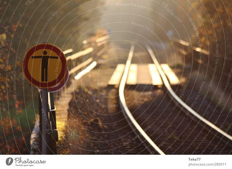 Enter Forbidden - Sun Bridge Waits Environment Nature Forest Transport Means of transport Traffic infrastructure Passenger traffic Road traffic Rail transport