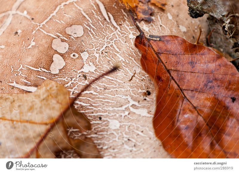 structures Nature Autumn Leaf Athletic Simple Natural Above Beautiful Brown Safety (feeling of) Together Calm Exhaustion Loneliness Peace Serene Hope Idyll