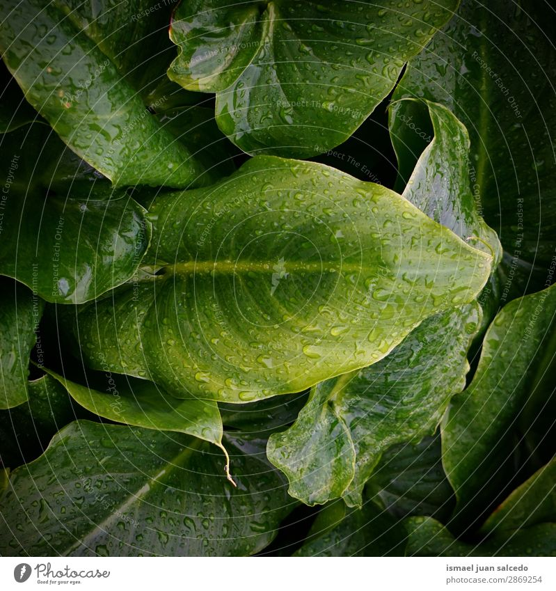 green plant leaves texture Plant Leaf Drop Rain Glittering Bright Green Garden Floral Nature Abstract Consistency Fresh Exterior shot background