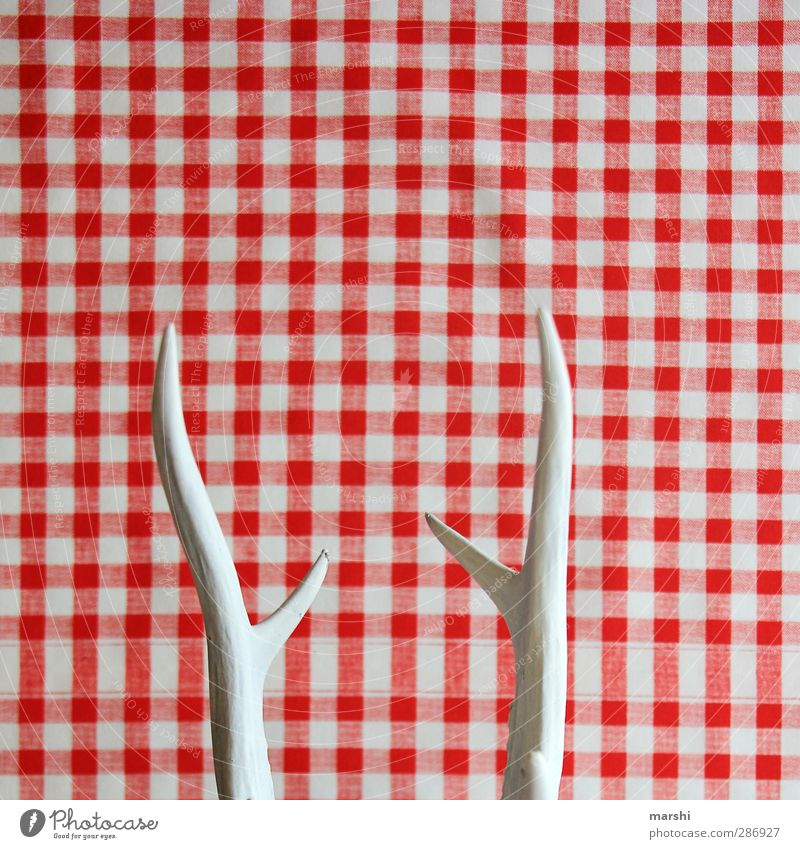 Horned Flat (apartment) Interior design Decoration Red White Antlers bock-horned Point Checkered Abstract Hunting hunting trophies Retro Colour photo