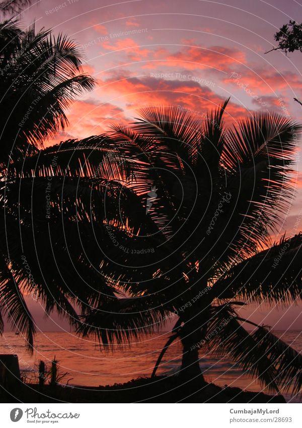 Sunset II Palm tree Ocean Beach Seychelles Violet Back-light