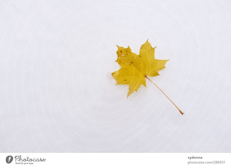 Autumn leaf in the snow Environment Nature Winter Climate Climate change Ice Frost Snow Leaf Esthetic Loneliness Uniqueness Discover Colour Freedom Idyll Life