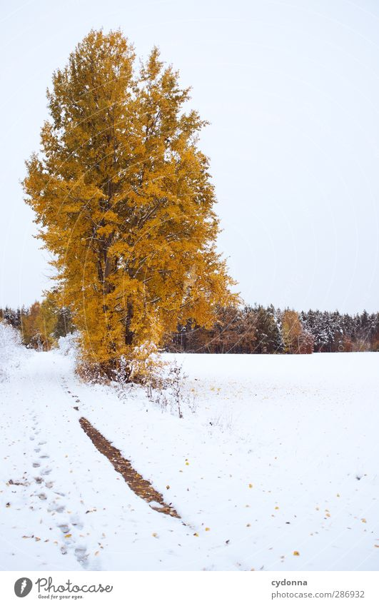 Sky Nature Beautiful Tree Colour Loneliness Calm Winter Landscape Forest Environment Meadow Cold Autumn Life Snow