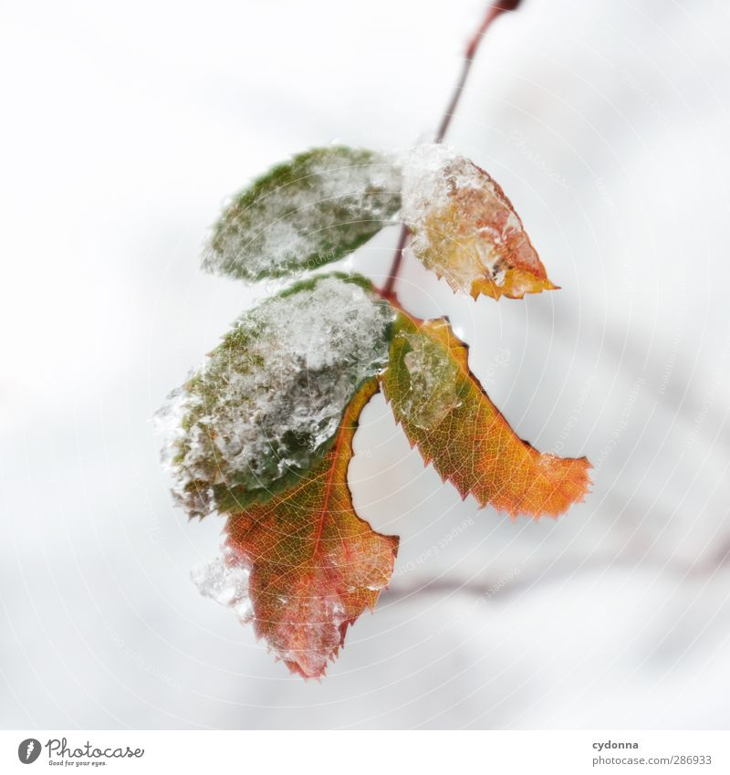 Resistant Environment Nature Autumn Winter Climate Climate change Ice Frost Snow Leaf Esthetic Uniqueness Discover Idyll Cold Life Calm Beautiful Protection