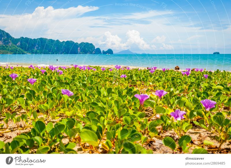 Flowers at Krabi beach, Thailand Beautiful Relaxation Vacation & Travel Tourism Summer Sun Beach Ocean Island Mountain Nature Landscape Plant Sand Sky Clouds