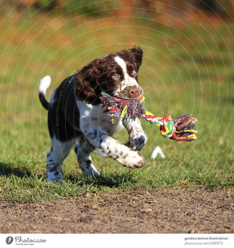 Dog Green White Joy Animal Jump Brown Toys Running Hunting Pet Rebellious Puppy Spring fever Dog toy