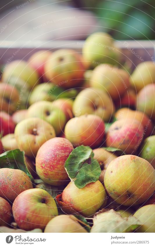 An apple a day .. Food Fruit Apple Nutrition Picnic Organic produce Vegetarian diet Healthy Life Kitchen Thanksgiving Fitness Sports Training Nature Autumn