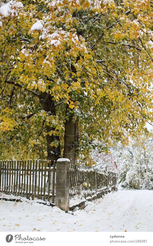 Nature Beautiful Tree Colour Loneliness Calm Winter Yellow Environment Cold Autumn Life Snow Lanes & trails Garden Dream
