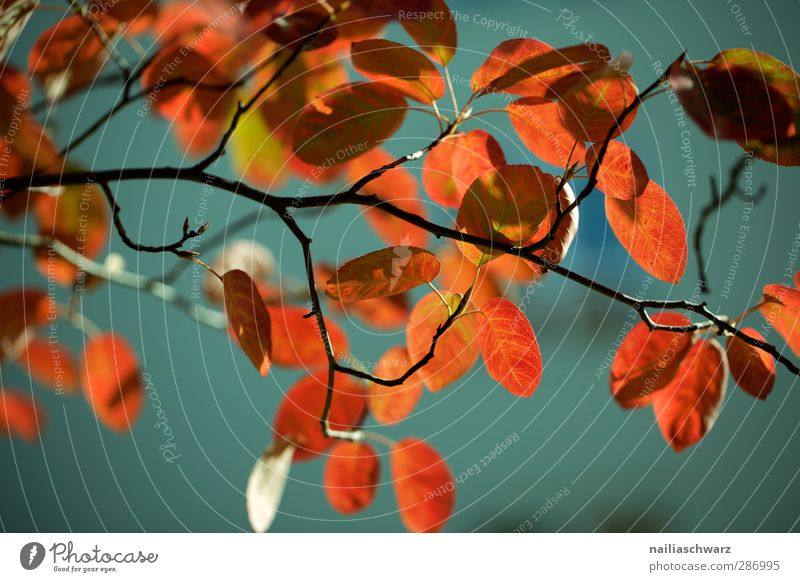 autumn colours Environment Nature Plant Sunlight Autumn Tree Leaf Foliage plant Beech tree Branch Twigs and branches Garden Park Wood Ornament Line Old Hang