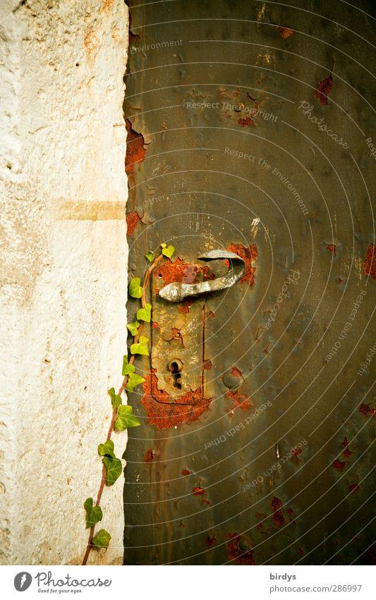 Old Religion and faith Time Growth Door Romance Change Historic Mysterious Past Rust Original Ivy Door lock Doorknob Emotions