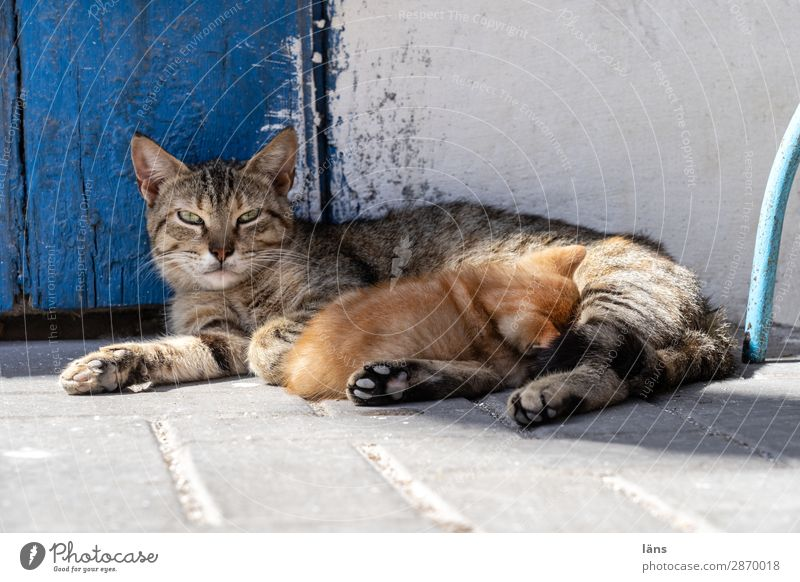 Table set you up Essaouira Wall (barrier) Wall (building) Animal Cat 2 Lie Drinking Together Feminine Contentment Passion Love Patient Calm Attachment